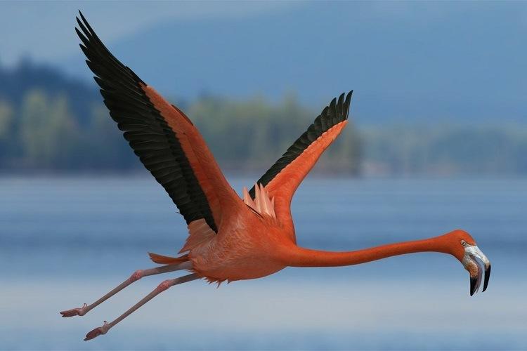 Características comunes de las aves zancudas