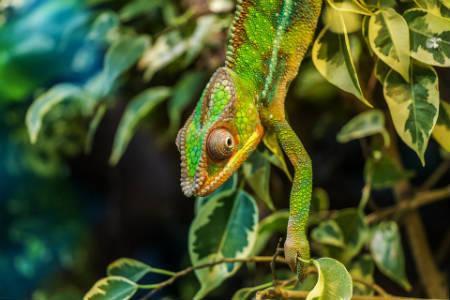 Madagascar el resto de la fauna