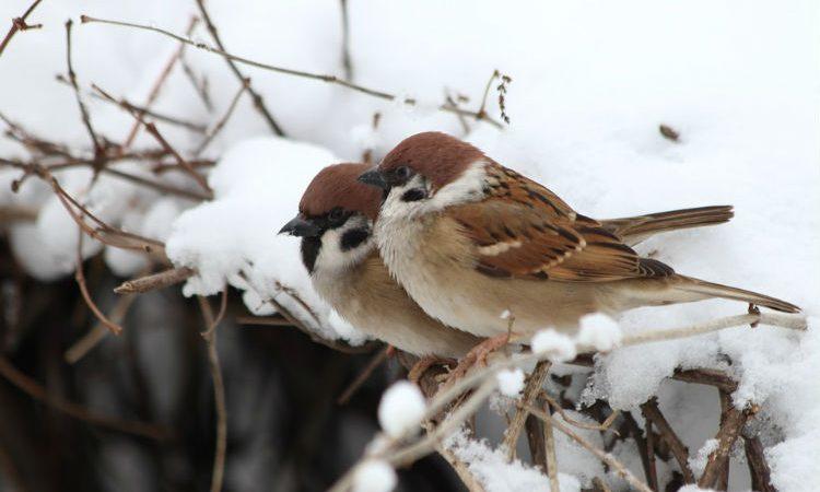 Todo sobre las aves canoras