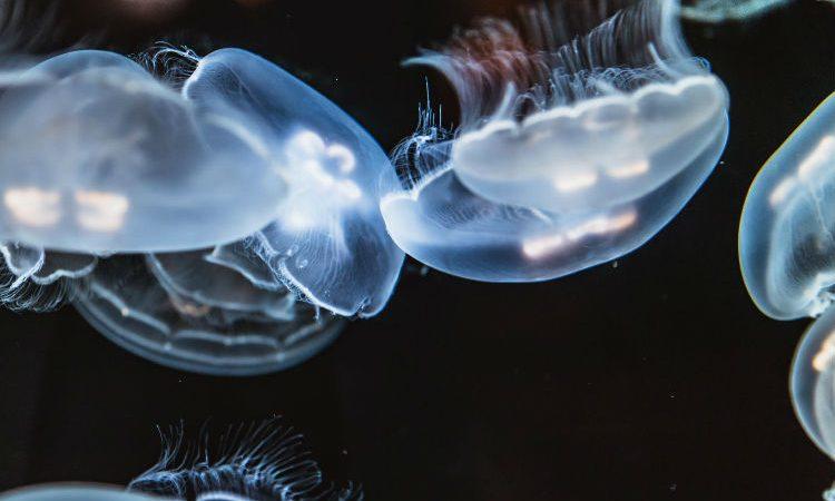 Animales transparentes que no creerás que existen