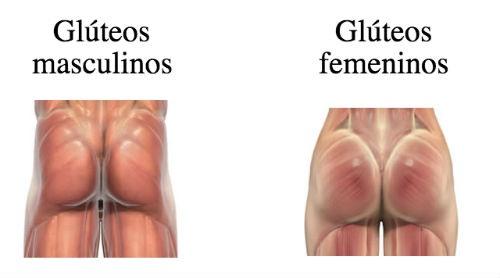 gluteos