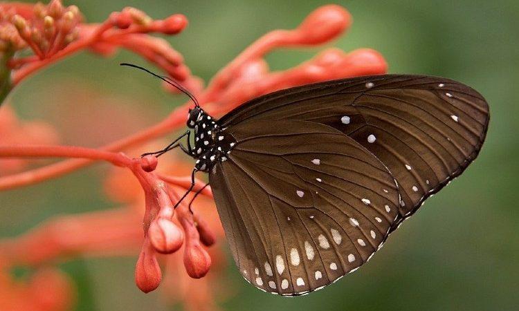 El mundo de las mariposas