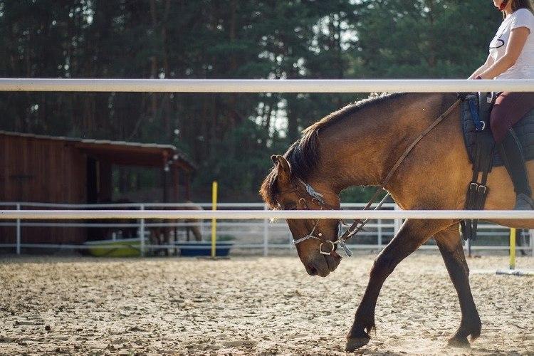 ¿Dónde comprar productos para el caballo y el jinete online?
