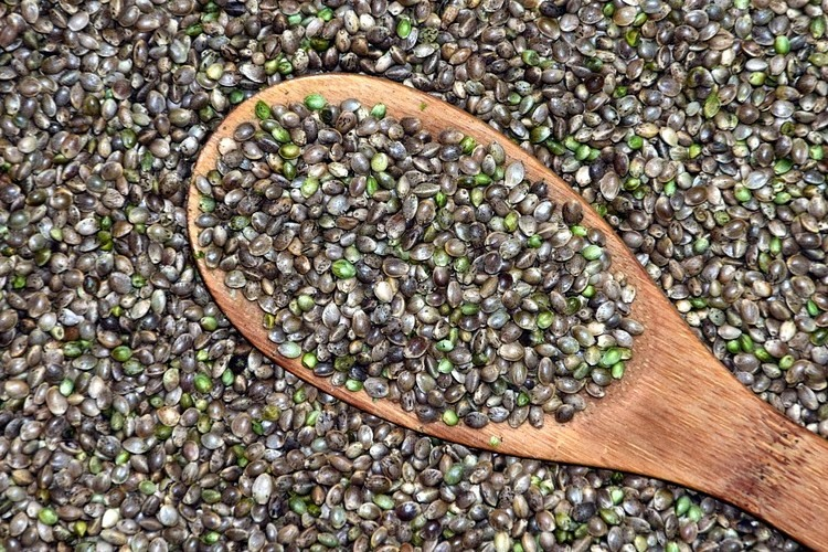 Cómo cultivar las semillas de marihuana