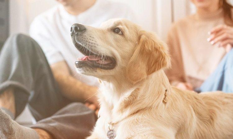 Un 5% de las viviendas que se alquilan en el país permiten animales, según Fotocasa
