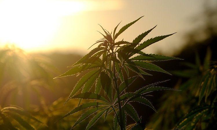 Consejos para elegir el mejor armario de cultivo de marihuana para interior